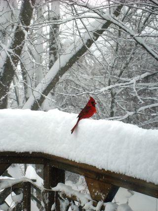 Snowmeddedon 414